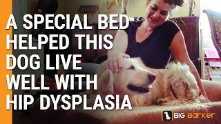 Download A Special Bed Helped This Dog Live Well With Hip Dysplasia Video