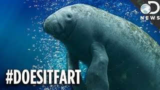 Download Can You Guess Which Animals Fart (Or Don't)? Video