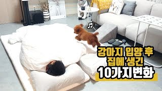 Download 강아지를 입양하니 집이 이렇게 변했어요 How the House Changed after Arrival of Dog Video