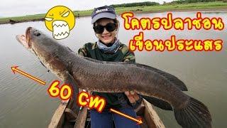 Download โคตรปลาช่อน ที่เขื่อนประแสร์ fishingEZ Video