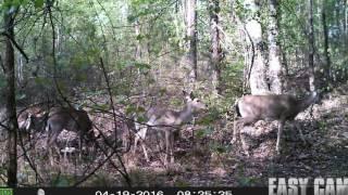 Download Deer trail pictures. Calvin's Corner72 Video