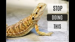 Download Common Bearded Dragon Care Mistakes Video