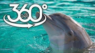 Download 360-Degree Dolphin Fun at Clearwater Marine Aquarium Video