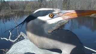 Download Best of: Bird Cams Video