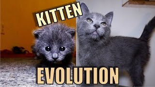 Download Kitten Evolution - The Gibbyson Video