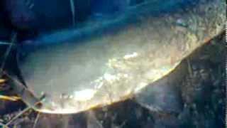 Download кызылорда сырдария рыбалка Video