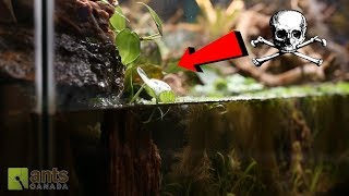 Download Dead Ants vs. Whirlpool Waterfall Video