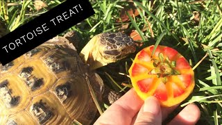 Download I Made a Fruit Pizza for my Tortoise! Video
