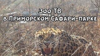 Download Зоо ТВ в Приморском Сафари-парке Video