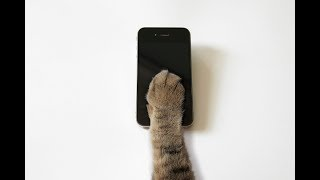 Download Why we should be more like cats than dogs when it comes to social media Video