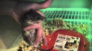 Download Turtles & Pet Room Update Video