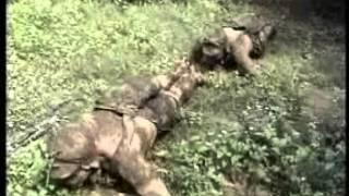 Download Entrenamiento FARC Video