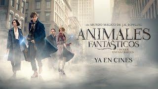 Download Animales Fantásticos y Dónde Encontrarlos - Tráiler Final Castellano HD Video