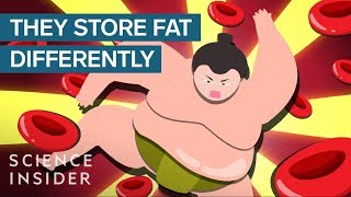 Download How Sumo Wrestlers Stay Healthy On 7,000 Calories A Day Video