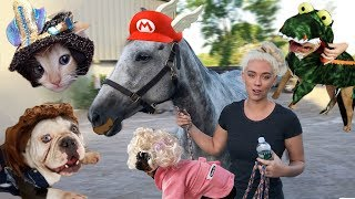 Download My Pets Try On Halloween Costumes From EBay and Amazon | NICOLE SKYES Video
