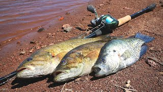 Download Catch n' Cook Bass & Crappie at Mountain Reservoir! Video