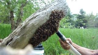 Download Swarm Capture with a Vaccum - Fixed... Video