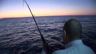 Download Gummy Shark Fishing Port Phillip Bay Video