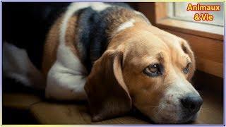 Download Suite à la mort de son maître, ce chien lui rend un magnifique hommage Video