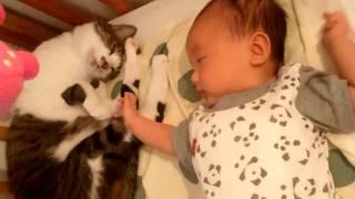 Download 赤ちゃん好きなねこ2 しっぽでトントン~ Video