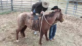 Download Texas Bronc Ride/Colt Starting Video
