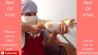 Download Funny Cats 2015 - Vine Compilation - BEST VINES ✔️ Video