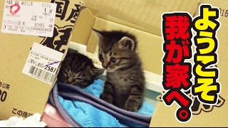 Download 捨て猫2匹との素敵な出逢い 〜 wonderful story with two protected kittens.〜 Video