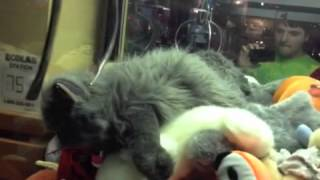 Download Claw Machine Master: The Realistic Kitten Video