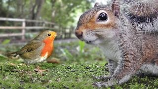 Download Videos for Cats to Watch - Birds and Squirrels Being Awesome Video