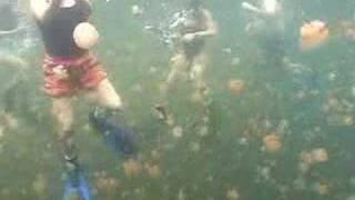 Download Jellyfish Lake Video