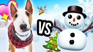 Download PUPPY SNOW REACTION (1st Time) Video