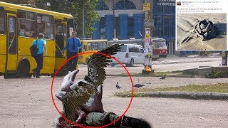 Download 7 Mysterious Creatures Caught On Camera & Spotted In Real Life #2 Video