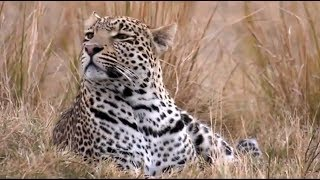 Download SafariLive Djuma July 16 - Well done Hosana! You're a great Leopard Video