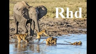 Download Baboons and Elephants of Chobe River, Nature 2018 full HD Documentary. Video