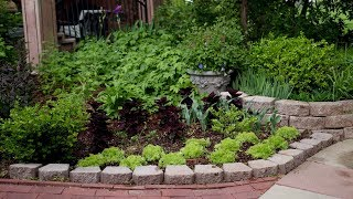Download Planting day! Sweet Potatoes, Coleus, Sedum & Hellebores! 👩🌾🌿 // Garden Answer Video
