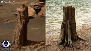 Download ANCIENT Tree Stump Found On Mars? 4/22/17 Video