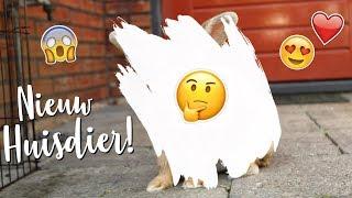 Download Ik heb een nieuw HUISDIER!! | Vlog #16 | Daphneee Video