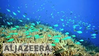 Download Australia's efforts to save the Great Barrier Reef Video