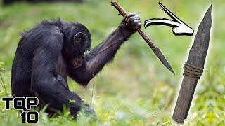 Download Top 10 Scary Animal Creations Video