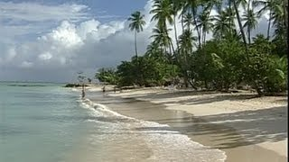 Download The Caribbean Island of Tobago Video