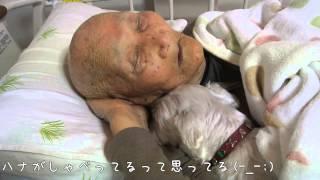 Download 99歳じいちゃんハナと一生懸命会話しようとする(- -;) Video