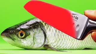 Download EXPERIMENT Glowing 1000 degree KNIFE VS FISH Herring Video