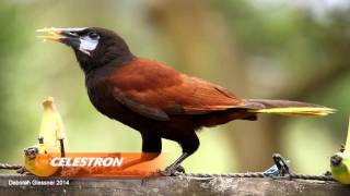 Download Celestron Visits The Cornell Lab of Ornithology Video