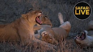 Download safariLIVE - Sunset Safari - October 12, 2018 - Part 2 Video