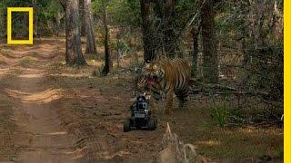 Download Robot vs. Tiger   Nat Geo Live Video
