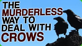Download The Murderless Way To Deal With Crows (How Birds Will Take Over the World) Video