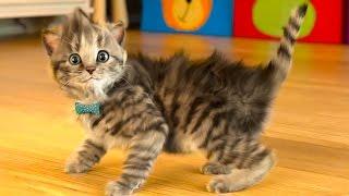 Download МОЙ Маленький КОТЕНОК СИМУЛЯТОР котика как мультик виртуальный питомец видео для детей #ПУРУМЧАТА Video