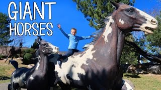 Download GIANT HORSES!!! Video