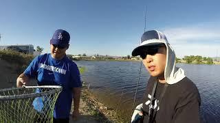 Download Santa Ana River Lakes - Catfish Limits! Video