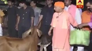 Download CM Yogi Adityanath feeds cows at a Gaushala in Gorakhpur Video